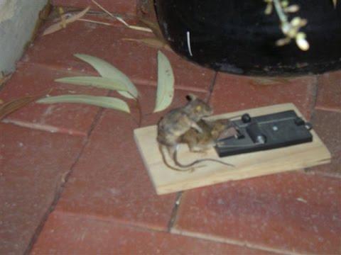 Мышка секс