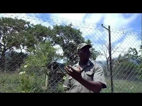 Moholoholo, wildlife reserve, South Africa