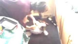 Взешивание кошки