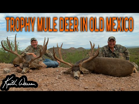 Hunting 2 GIANT Mule Deer In Mexico