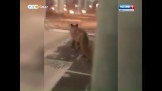видео Тротуарная плитка – мифы и факты