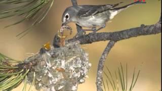 Перелётные птицы весной