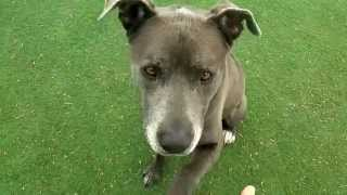 Maximus (a835648) Is Available For Adoption In Las Vegas, Nv