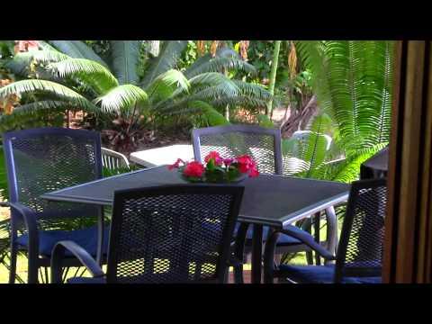 A real Hibiscus on Christmas Island