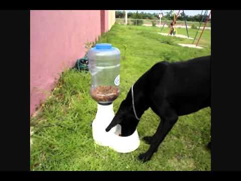 Comedero automatico para mascotas dogfacil youtube for Comederos para perros