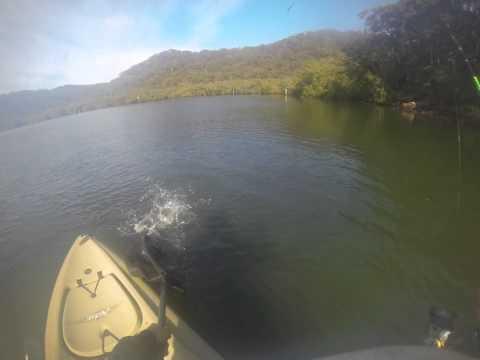 Patonga Creek Bream