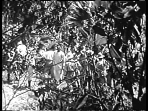 White Pongo (1945) JUNGLE ADVENTURE