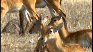 La faune d'Ouganda