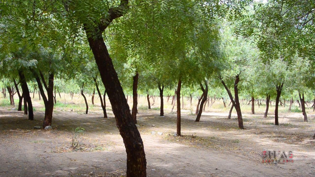 Jeddah Forest Park #الغابة#الشرقية #جدة#Jeddah#Forest#Park ...