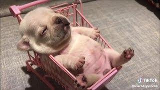 Cún con siêu quậy và đáng yêu #4 | Yêu Pets