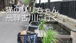 猫のリリちゃん飛騨古川に行く