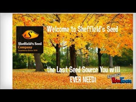 Tree Seeds Online