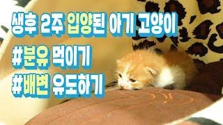 고양이 배변유도, 분유 먹이기 유기묘 새끼 고양이 입양…