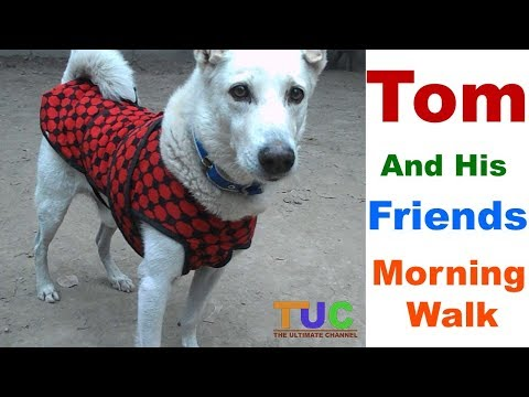 TOM And His Friends - Morning Walk : Tom Diaries : The Ultimate Channel