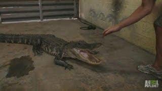 Gator in the Garage   Gator Boys