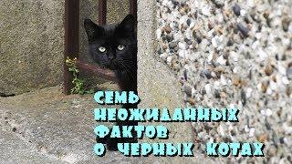 Черные коты. Семь неожиданных фактов.