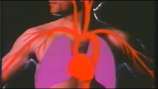 Enciclopedia Americana, Anatomía, El Sistema Respiratorio