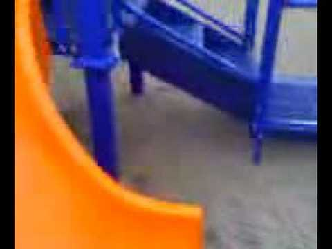 dog goes down slide