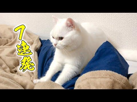 eng)-fluffy-pomu's-kneading!