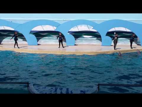 Gulf World Marine Park Panama City Florida