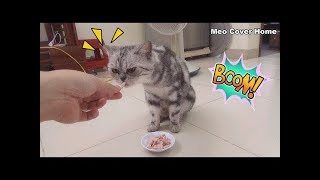 Mother Cat Eating Fish So Yummy | Funny Cat Vines 2019 [Funny Pets]
