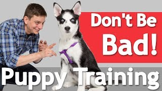 How to Train your Dog to BE GOOD in the HOUSE!