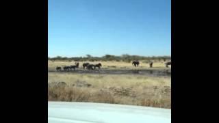 Pur Namibie : Voyage Namibie, Etosha Pan