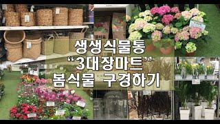 [생생식물통]코스트코,이마트,하나로마트 봄식물 구경하기…