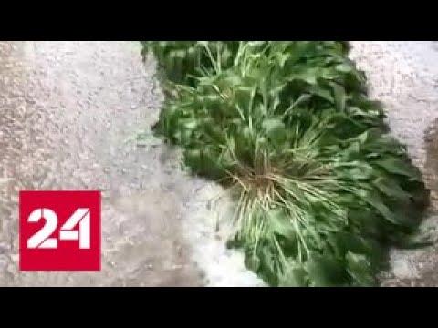 В Краснодарском крае выпал град размером с перепелиное яйцо - Россия 24