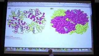 #05 Biochemistry Protein Tertiary/Quaternary Structure Lecture for Kevin Ahern