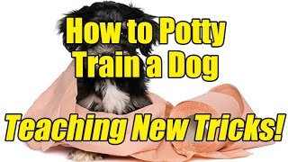 How to Potty Train a Dog - Teaching an Old Dog New Tricks!