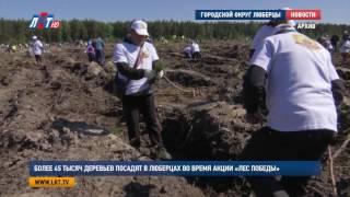 Более 45 тысяч деревьев посадят в Люберцах во время акции «Лес Победы»