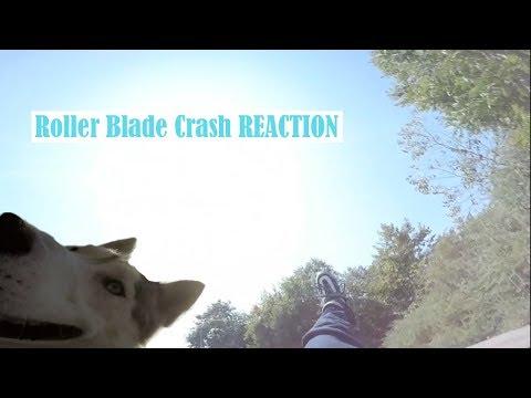 Roller Blading CRASH Siberian Husky Reaction, Buying A Longboard!
