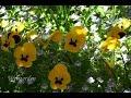 неприхотливые цветы в доме фото