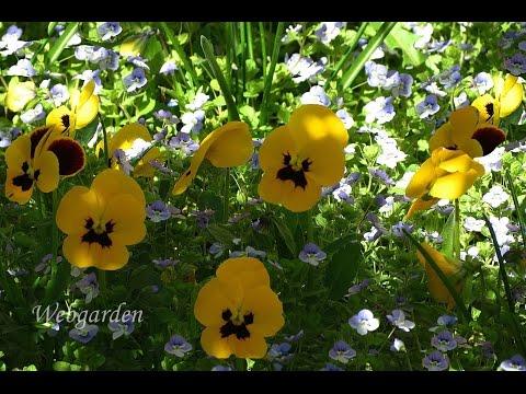 Какие цветы посадить  возле  дома