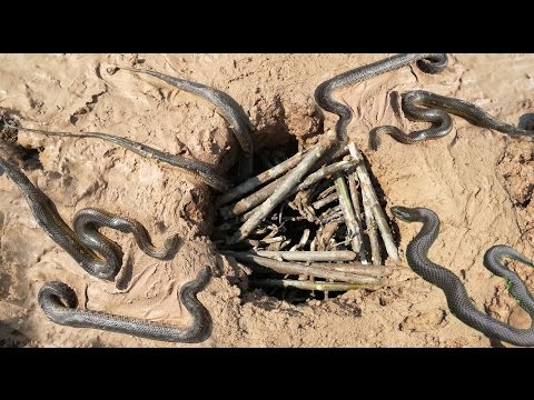 Thumbnail: Amazing Deep Hole Snake Trap - Smart Boys Catch Snake Using Deep Hole Snake Trap