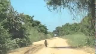 Onça-pintada correndo em estrada de terra no Pantanal