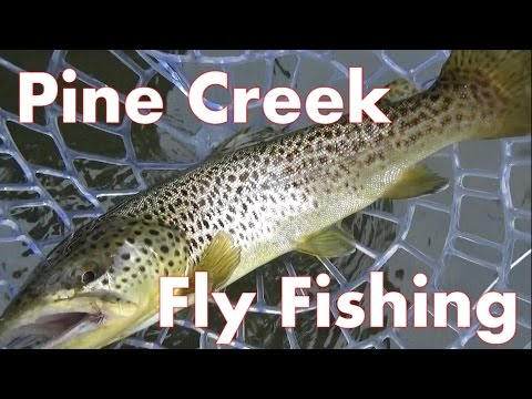 Pine Creek Dry Fly Fishing 2016