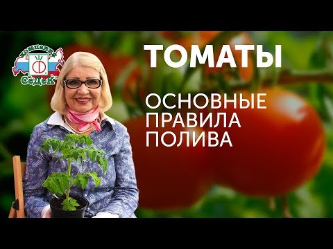 Вопрос: Как поливать помидоры в конце июля?