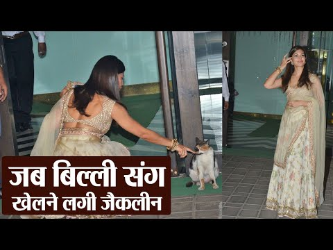 Jacqueline Fernandez playing with cat in middle of Arpita Khan's Diwali Party