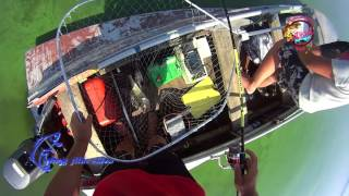 Днепр Мишурин Рог август 2017 судак, окунь в 40 а градусную жару Honda BF5 SU  на казанке