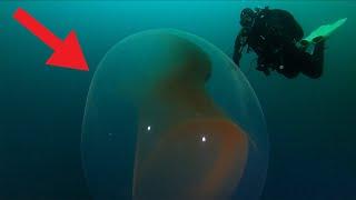 NURKOWIE znaleźli OGROMNE TAJEMNICZE JAJO w OCEANIE