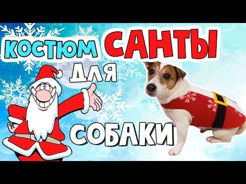 Новогодний костюм Санты для собаки своими руками/DIY Dog Santa costume/DOGS IN CHRISTMAS COSTUME
