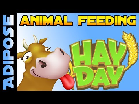 Hay Day - Beginners Guide to Animal Feeding