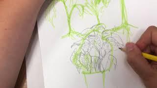 Drawing Plants!