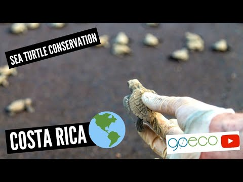 GoEco VOLUNTEER Trip Vlog - The CARE Taking And Conservation Of COSTA RICA's Sea Turtles