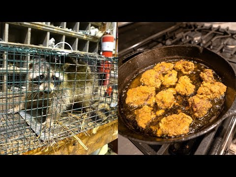Raccoon CATCH CLEAN COOK!!! (Is It Good?)
