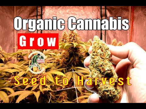 COMPLETE ORGANIC CANNABIS GROW - SEED TO HARVEST