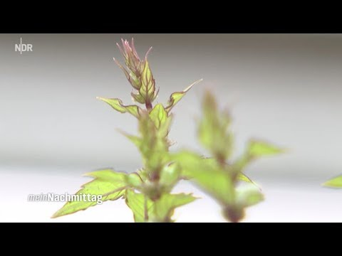 NDR Mein Nachmittag Aromapflanzen  –Kräuter für die Sinne