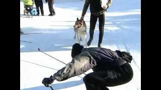 Екатеринбургские лыжники запрягли собак